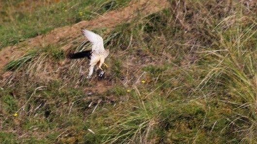 181011 Ogmore birding (11)