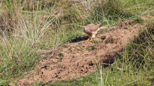 181011 Ogmore birding (12)