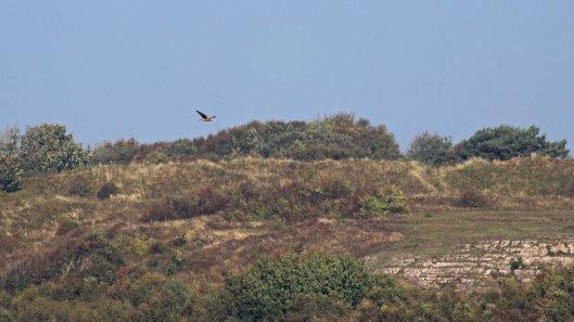 181011 Ogmore birding (2)