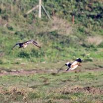 181011 Ogmore birding (3)