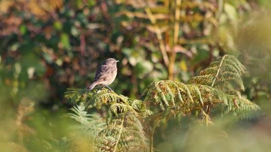 181011 Ogmore birding (9)
