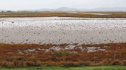181014 Steart Marshes (1)