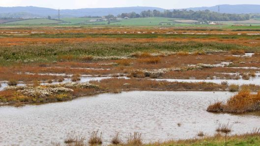 181014 Steart Marshes (11)