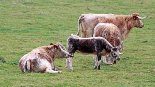 181015 longhorn (1)