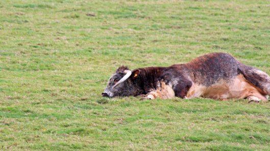 181015 longhorn (2)