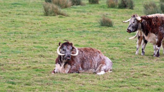181015 longhorn (3)