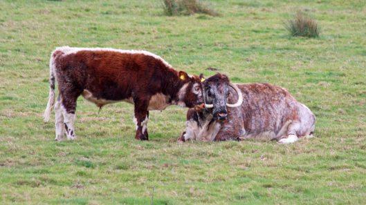 181015 longhorn (4)
