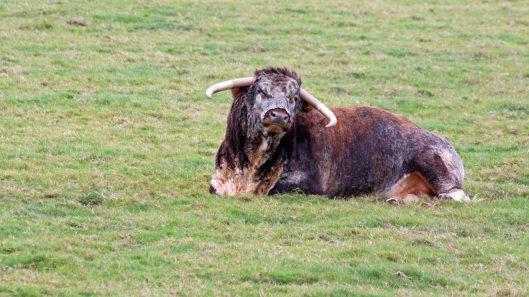 181015 longhorn (5)