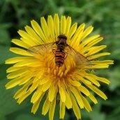 181019 yellow flowers (5)