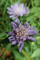 181019 zigzag wildflowers (1)