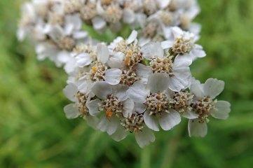 181019 zigzag wildflowers (10)