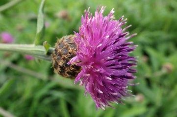 181019 zigzag wildflowers (11)