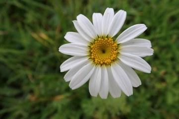 181019 zigzag wildflowers (15)