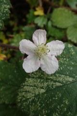 181019 zigzag wildflowers (16)