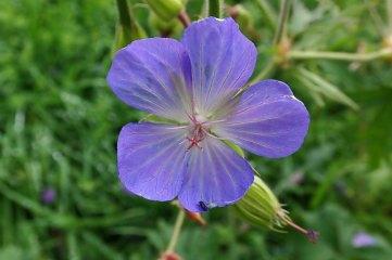 181019 zigzag wildflowers (17)