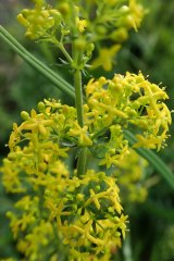 181019 zigzag wildflowers (3)