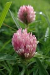 181019 zigzag wildflowers (5)