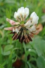 181019 zigzag wildflowers (6)