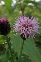 181019 zigzag wildflowers (8)