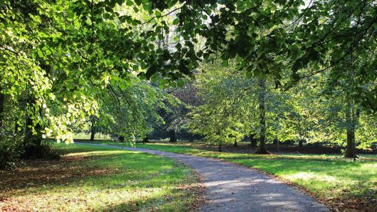 181021 Bute trees (2)