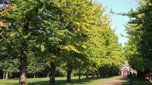 181021 Bute trees (3)