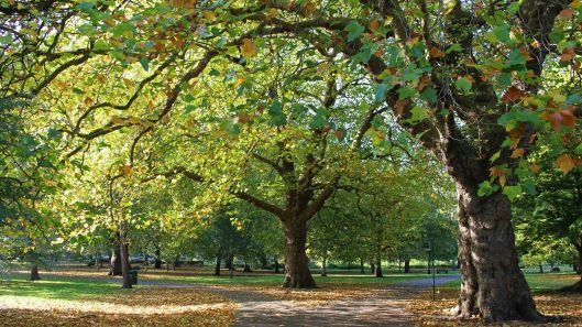 181021 Bute trees (4)