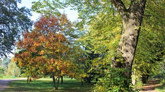 181021 Bute trees (5)
