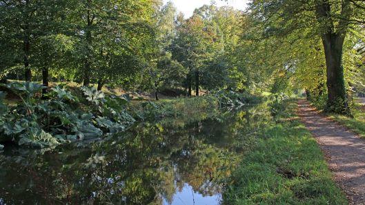 181021 Bute trees (6)
