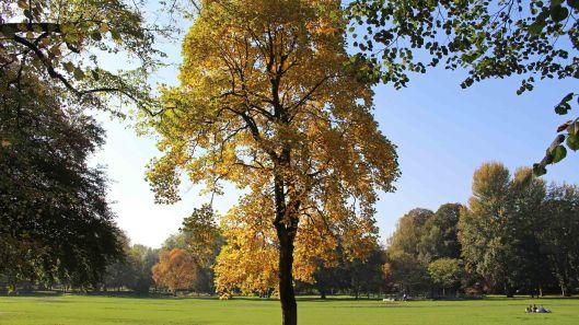 181021 Bute trees (7)