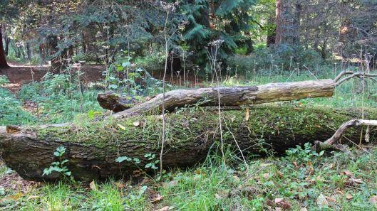 181022 fungi on log (1)