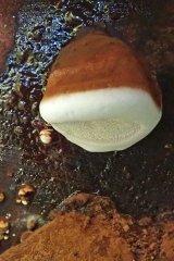 181022 fungi on log (4)