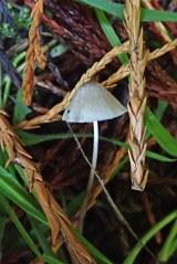 181022 fungi on log (9)