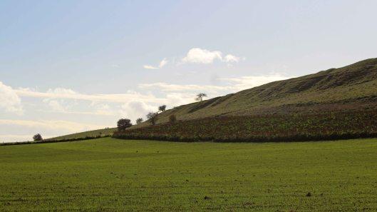 181029 birding at maiden castle (1)
