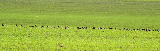181029 birding at maiden castle (2)