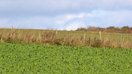 181029 birding at maiden castle (3)