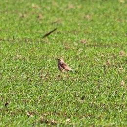 181029 birding at maiden castle (4)