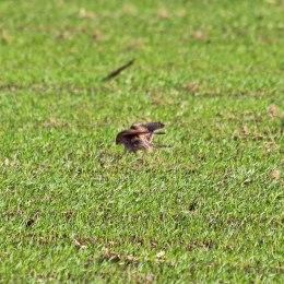 181029 birding at maiden castle (5)