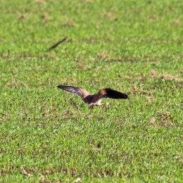 181029 birding at maiden castle (6)