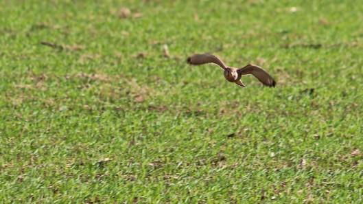 181029 birding at maiden castle (8)