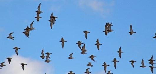 181029 birding at maiden castle (9)