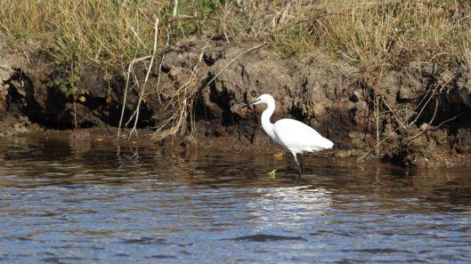 181031 birding Lodmoor (4)