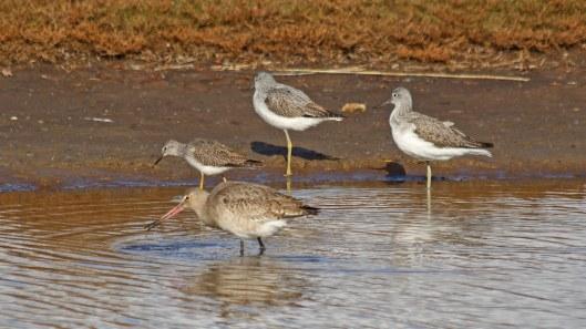 181031 birding Lodmoor (9)