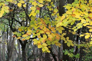 181111 Cosmeston colour (5)