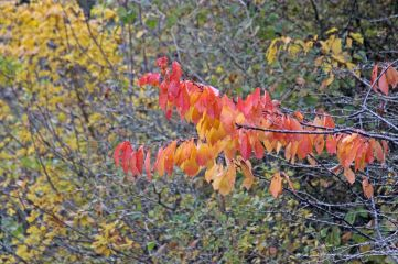 181111 Cosmeston colour (9)