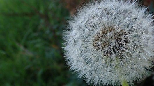 181115 seed dispersal (1)