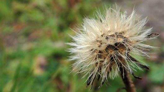 181115 seed dispersal (4)