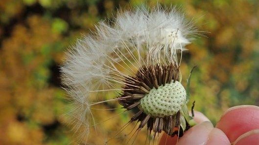 181115 seed dispersal (6)