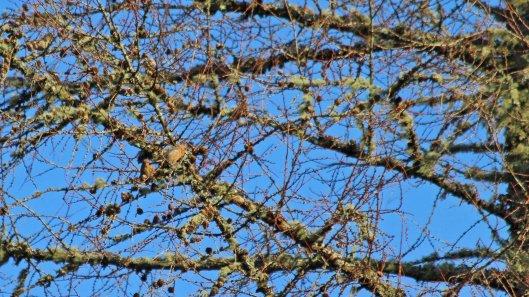 181119 birding at garwnant and rhaslas (3)
