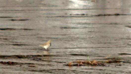181119 birding at garwnant and rhaslas (7)