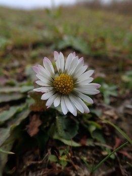181125 daisy